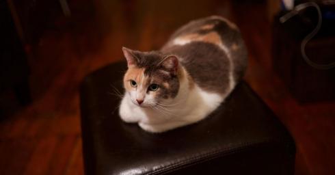 So sánh camera của các đời iPhone qua một chú mèo